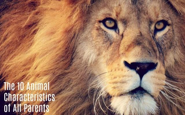 animal characteristics