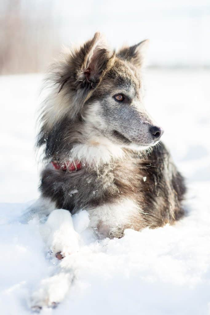 keep your dog warm