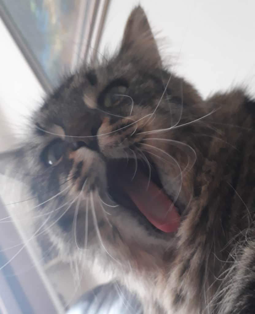 life lately image of cat yawning