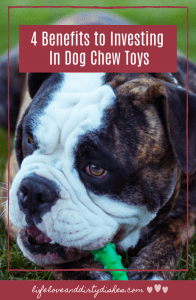 4 benefits for buying your dog Dog Chew Toys